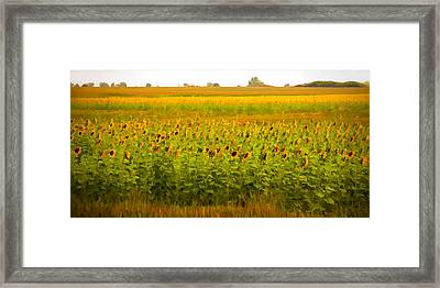 Summer Blooms Framed Print by Robert  McCord
