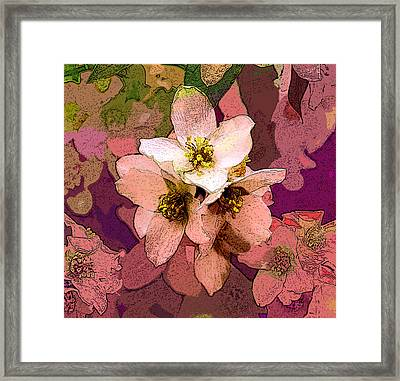 Summer Blossom Framed Print