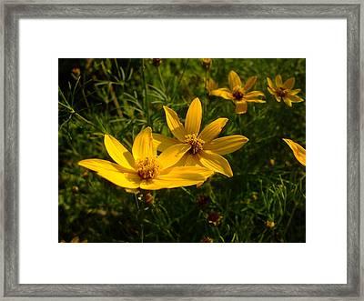 Summer Blossums Framed Print by Ali Dover
