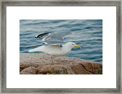 Summer Breeze Framed Print by Frank Pietlock