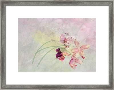 Summer Breeze Framed Print by Rosalie Scanlon