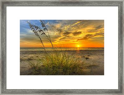 Summer Breezes Framed Print