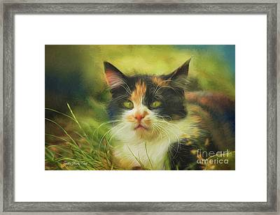 Framed Print featuring the photograph Summer Cat by Jutta Maria Pusl