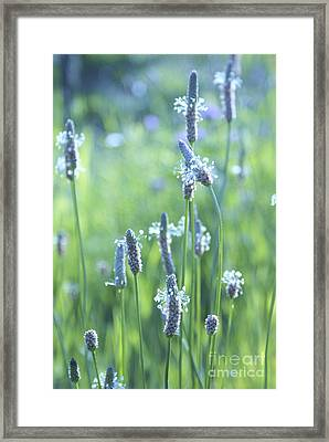 Summer Charm Framed Print