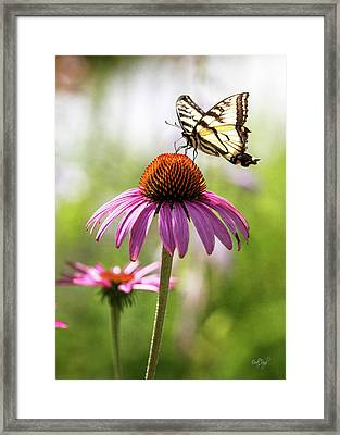 Framed Print featuring the photograph Summer Colors by Everet Regal