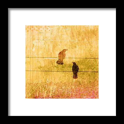 Ornithologist Framed Prints