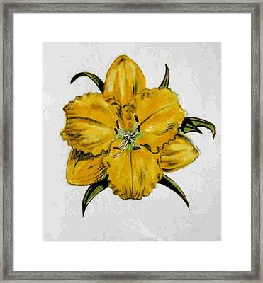 Summer Daylily Framed Print by Dy Witt