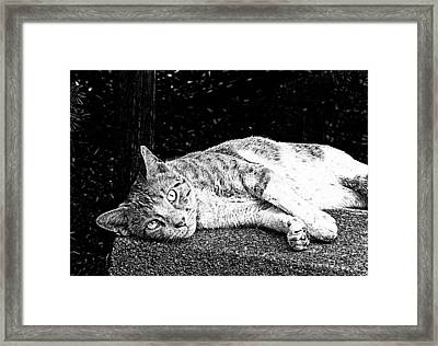 Summer Days 3 Framed Print by Michael Taggart II