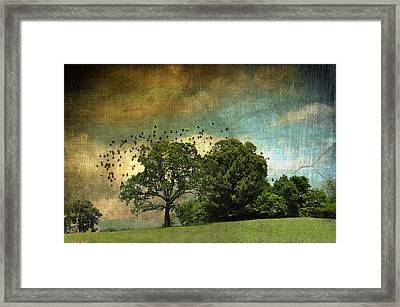Summer Days In Sautee Framed Print by Jan Amiss Photography