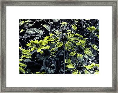 Summer Delights Framed Print