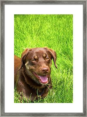 Summer Dog Framed Print