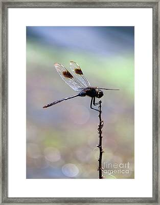 Summer Dragonfly With Sparkling Pond Framed Print