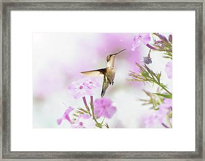 Summer Dreams. Framed Print by Kelly Nelson