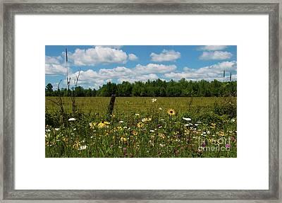 Summer Dreams... Framed Print by Nina Stavlund
