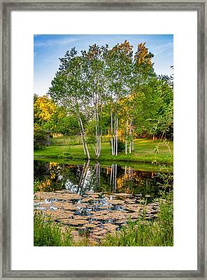 Summer Evening 2 Framed Print by Steve Harrington