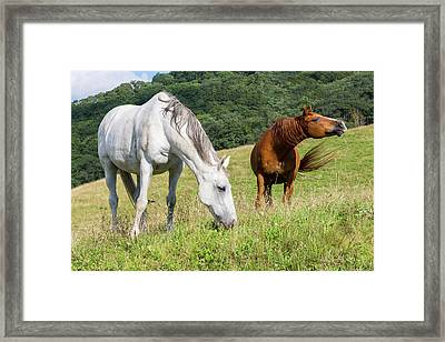 Summer Evening For Horses Framed Print