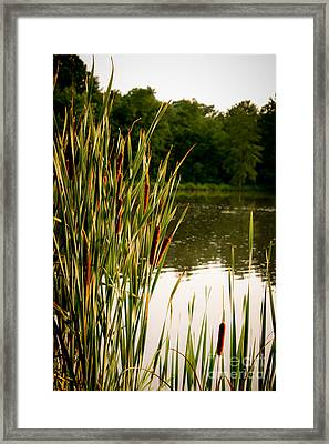 Summer Evening On The Pond Framed Print by Jim Raines