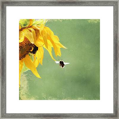 Summer Feeling Framed Print