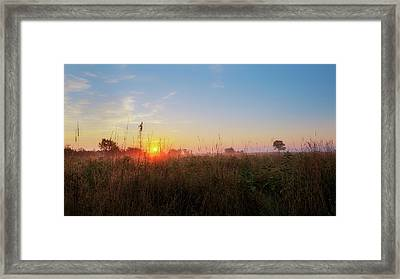 Summer Fields 2016 Framed Print