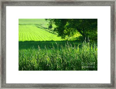 Summer Fields Of Green Framed Print by Sandra Cunningham