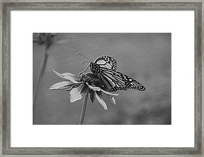 Summer Floral With Monarch Butterfly 04 Bw Framed Print