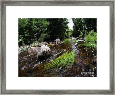 Summer Flow Of Water Near Rangeley Maine  -63322 Framed Print