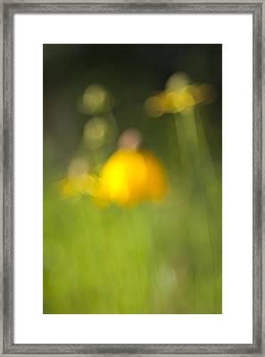 Summer Flowers Framed Print by David Wynia