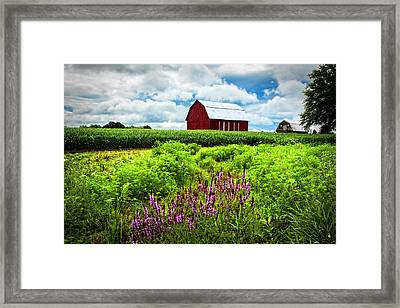 Summer Flowers In The Fields Framed Print by Debra and Dave Vanderlaan