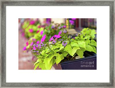 Summer Flowers In Window Box Framed Print