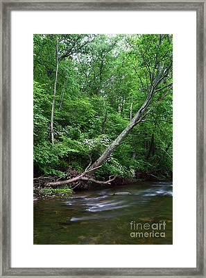 Summer Foliage Along The Patapsco River Maryland Framed Print