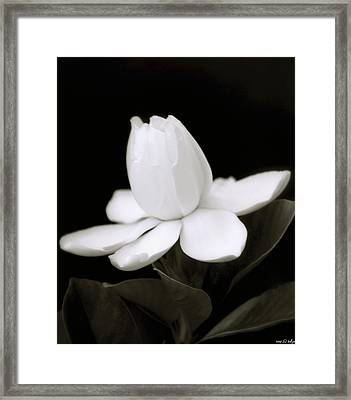 Summer Fragrance Framed Print