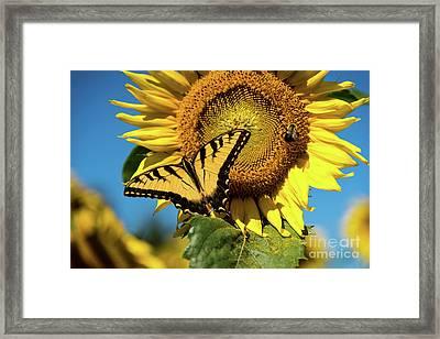 Summer Friends Framed Print by Sandy Molinaro