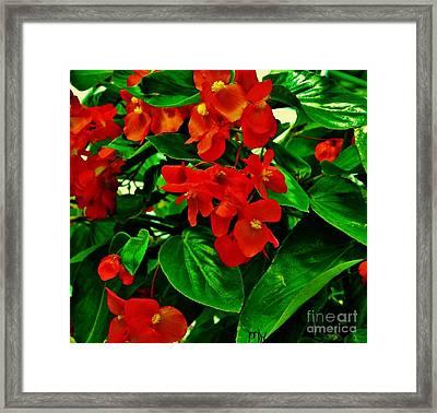 Summer Geranium Framed Print