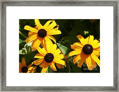 Summer Glow Framed Print by Amy Holmes
