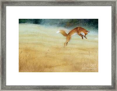 Summer Gold Fox Framed Print by Tracy Herrmann
