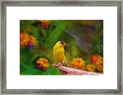 Summer Goldfinch - Digital Paint  Framed Print by Debbie Portwood