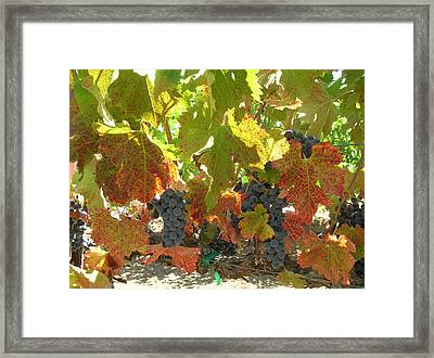 Summer Grapes Framed Print