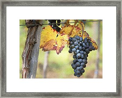 Summer Grapes Framed Print by Sharon Foster
