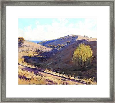 Summer Grasses Kanimbla, Australia Framed Print by Graham Gercken
