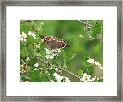 Framed Print featuring the photograph Summer Haw In Spring by Peg Urban