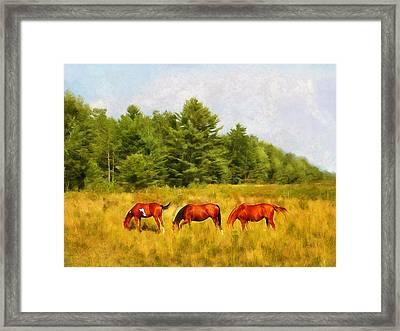 Summer Hay Burners Framed Print