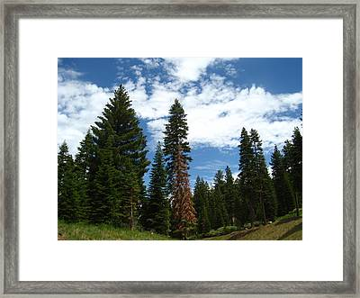 Summer Hike Framed Print by Sheryl Burns