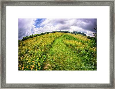 Framed Print featuring the photograph Summer Hike Through Blue Ridge Flowers by Dan Carmichael