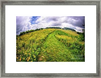 Framed Print featuring the photograph Summer Hike Through Blue Ridge Flowers by Dan Carmichael