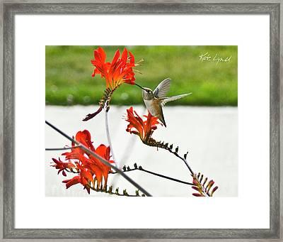 Summer Hummer II Framed Print