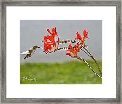 Summer Hummer IIi Framed Print