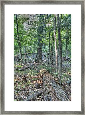 Summer In A Canadian Forest Framed Print