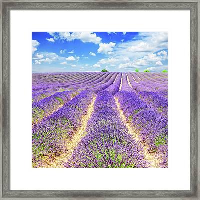 Summer In Provence Framed Print by Anastasy Yarmolovich
