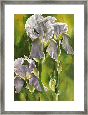 Framed Print featuring the painting Summer Irises by Alfred Ng