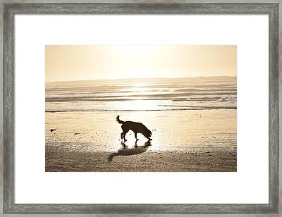 Summer Framed Print by Janet Darling
